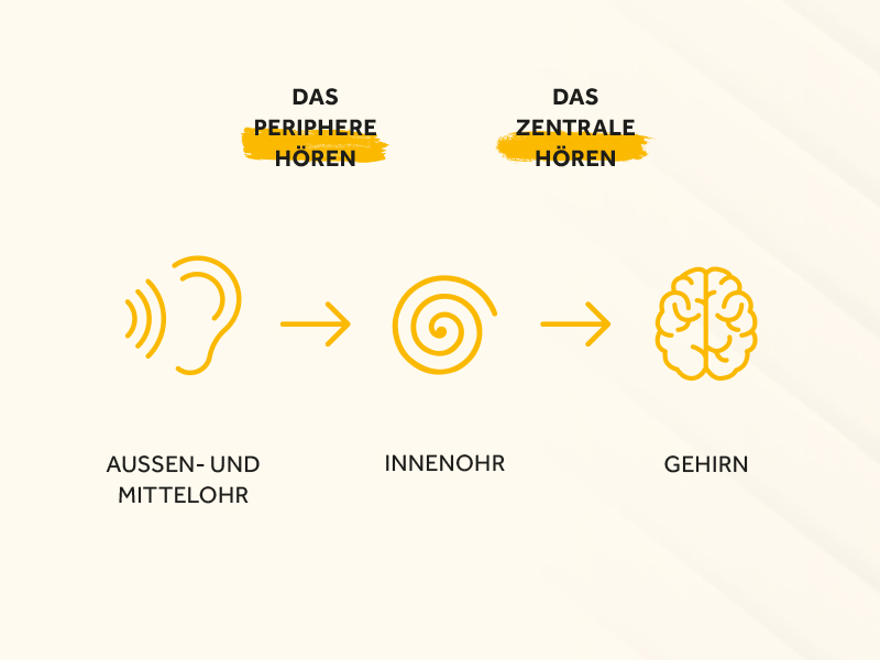 Infografik Hörvorgang